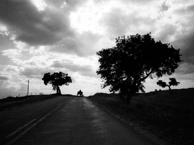 Portugal, Alentejo, near Moura. 2000.