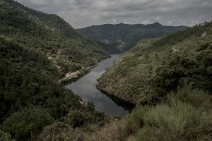 Portugal, Alto Douro. 2017. View at the River Tua valley near the former railway station of São Lourenço (marker 16) where the railway is being submerged by the rising waters after the completion of the barrage downstream.